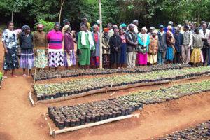 Volontariato in Kenya con Mount Kenya Environmental Conservation