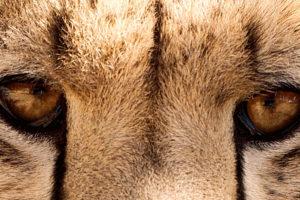Volontariato in Sudafrica con Cheetah Outreach