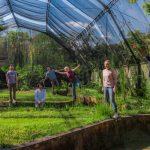 Volontariato in Brasile con IPBio