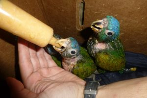 Volontariato in Ecuador con Merazonia Wildlife Rescue and Rehabilitation