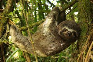 Volontariato in Ecuador con Merazonia Wildlife Rescue and Rehabilitation