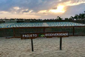 Volontariato in Cabo Verde con Project Biodiversity